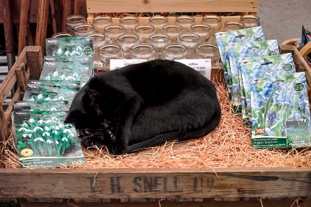 black cat at Boma garden centre with hyacinth vases in the background