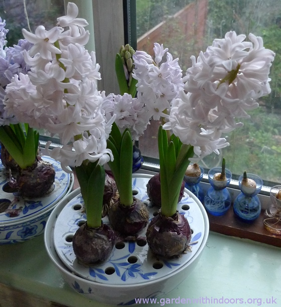 City of Bradford hyacinth bulb bowl