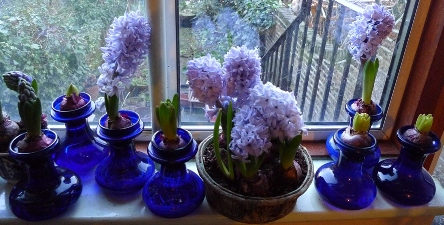 Delft blue hyacinths in vases and a pot