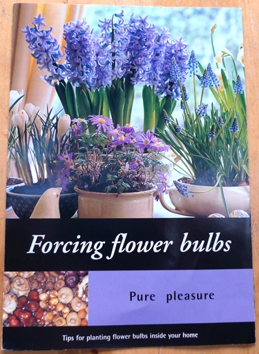 Forcing Flower Bulbs Pure Pleasure