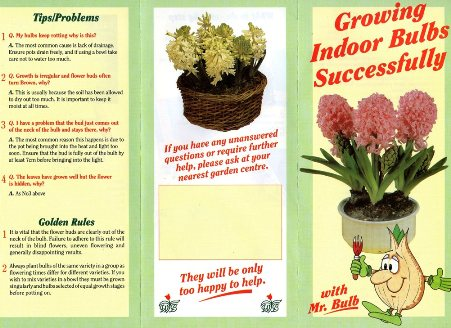 Growing Indoor Bulbs Successfully with Mr Bulb page 1