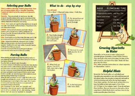 Growing Indoor Bulbs Successfully with Mr Bulb page 2