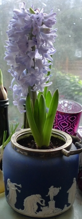 biscuit barrel with hyacinth bulb