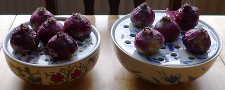 bulb bowls with hyacinth bulbs