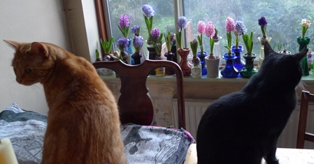 cats and hyacinth vases