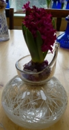 Jan Bos hyacinth in clear Broste hyacinth vase