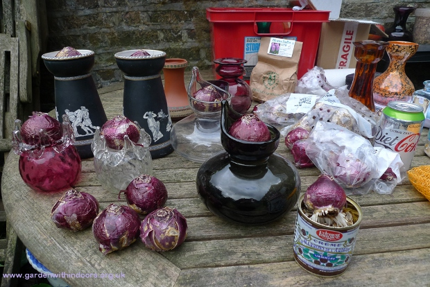 hyacinth bulbs and vases