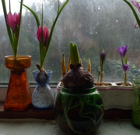 end of January latest small bulbs