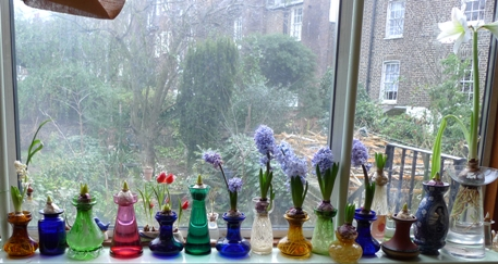panorama of bulbs end of January