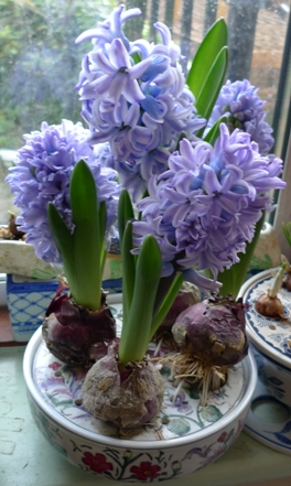Past Times hyacinth bulb bowl