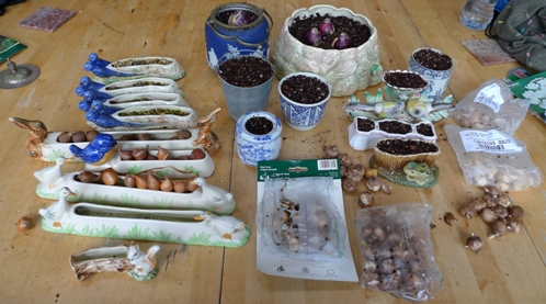 pots and troughs with bulbs for forcing