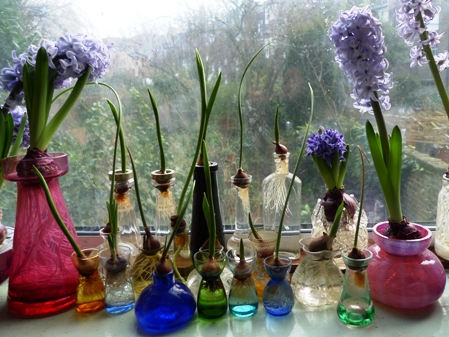 small bulbs in vases