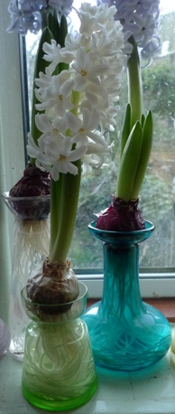 small green vase with Aiolos white hyacinth