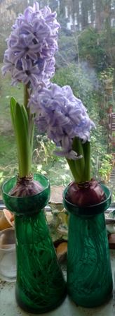 teal hyacinth vases