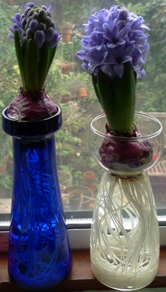 two Delft blue hyacinths