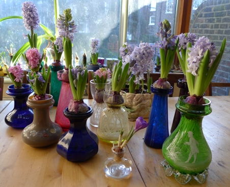 hyacinth vases in January