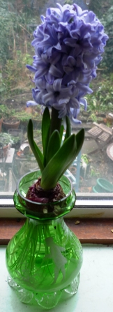 Delft Blue hyacinth in Mary Gregory hyacinth vase